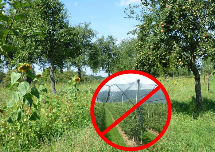 Streuobst = keine Plantage